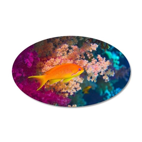 Lyretail anthias and coral 35x21 Oval Wall Decal