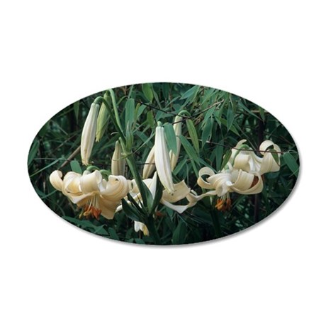 Lilium x testaceum flowers 35x21 Oval Wall Decal