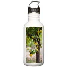 Lemon tree (Citrus lim Sports Water Bottle