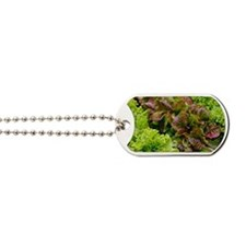 Lettuce Dog Tags