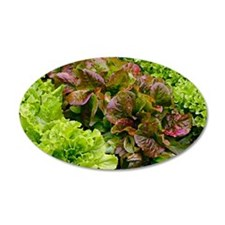 Lettuce Wall Decal