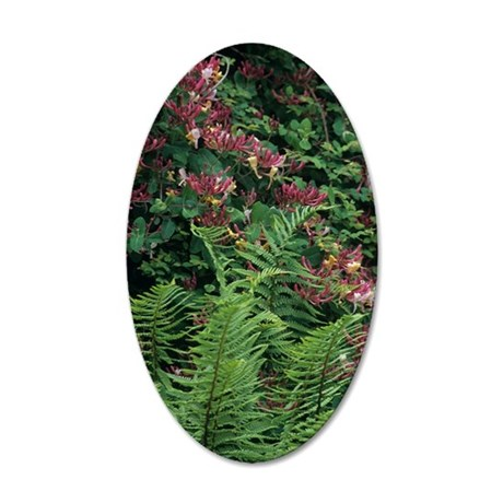 Honeysuckle and male fern 35x21 Oval Wall Decal
