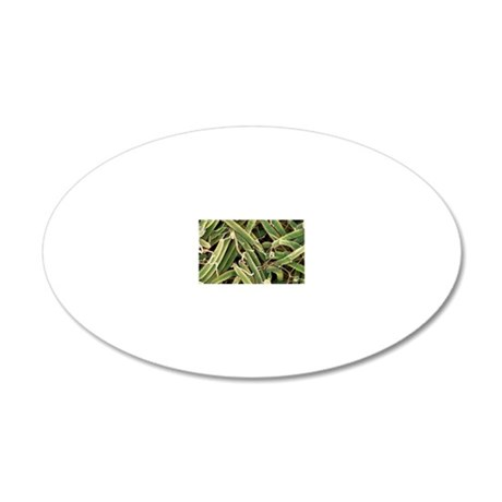 Helicobacter bilis bacteria, 20x12 Oval Wall Decal