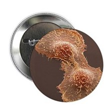 "HeLa cell division, SEM 2.25"" Button"