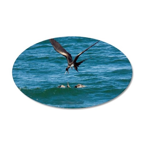 Great frigatebird and blue-f 35x21 Oval Wall Decal
