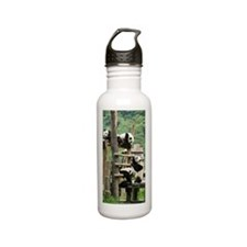 Giant panda, China Stainless Steel Water Bottle