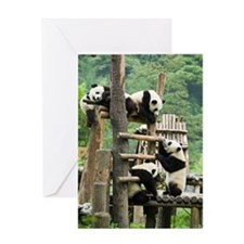 Giant panda, China Greeting Card
