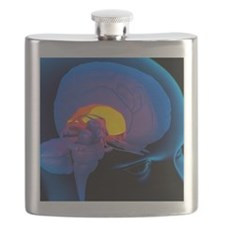 Globus pallidus in the brain, artwork Flask