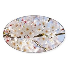 White cherry tree blossoms Decal