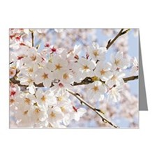 White cherry tree blossoms Note Cards (Pk of 20)
