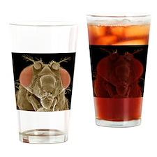 Fruit fly head, SEM Drinking Glass