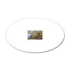 Forsythia 'Minigold' flowers 20x12 Oval Wall Decal