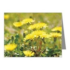 Dandelion Note Cards (Pk of 10)