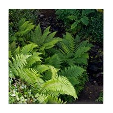 Ferns by a stream Tile Coaster