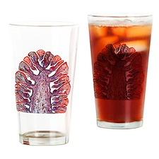 Female pine cone, light micrograph Drinking Glass