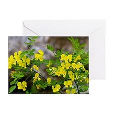 False Senna (Coronilla emerus) Greeting Card