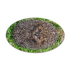 European hedgehog 35x21 Oval Wall Decal