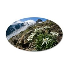 Edelweiss and glacier Wall Decal