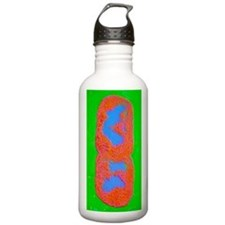 E.coli bacterium divid Water Bottle