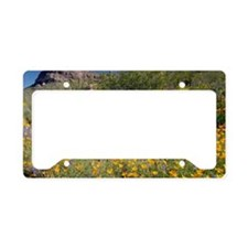 Desert wildflowers License Plate Holder