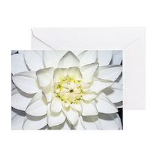 Dahlia 'Le Castel' Greeting Card