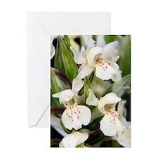 Dactylorhiza sambucina Greeting Card