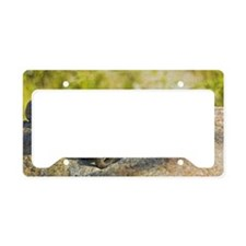 Rosy Boa Lichanura trivirgata License Plate Holder
