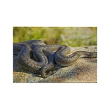 Rosy Boa Lichanura trivirgata Rectangle Magnet