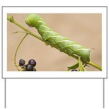 A tobacco hornworm (Manduca sexta) walki Yard Sign