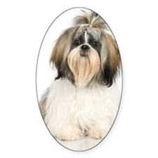 Studio portrait of Shih Tzu dog Decal