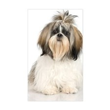 Studio portrait of Shih Tzu do Decal