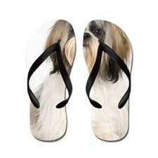 Studio portrait of Shih Tzu dog Flip Flops