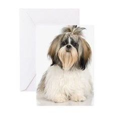 Studio portrait of Shih Tzu dog Greeting Card