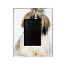 Studio portrait of Shih Tzu dog Picture Frame