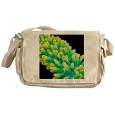 Chickweed flower pistil, SEM Messenger Bag