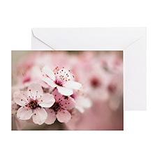 Cherry Plum (Prunus ceracifera) Greeting Card