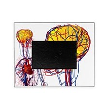 Cardiovascular system and brain, art Picture Frame