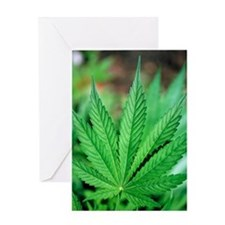 Cannabis leaves Greeting Card