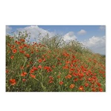 Red Poppies with Spring F Postcards (Package of 8)