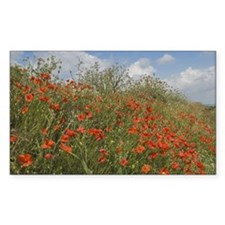 Red Poppies with Spring Flower Decal