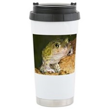 A Couch's spadefoot toad Scaphi Stainless Steel Tr