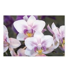 Group of Orchid Oncidium Postcards (Package of 8)
