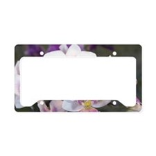 Group of Orchid Oncidium License Plate Holder
