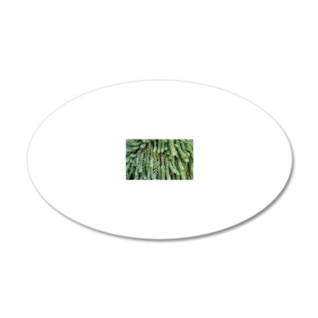 Burro's tail foliage 20x12 Oval Wall Decal