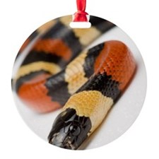 Pueblan Milk Snake, Snake Ornament