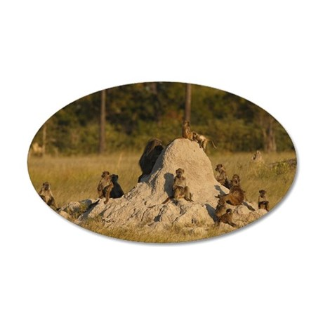 Baboons Papio ursinus troop  35x21 Oval Wall Decal