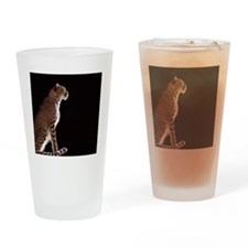 Cheetah Acinonyx jubatus, profile Drinking Glass