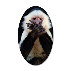 White-throated capuchin Cebu 35x21 Oval Wall Decal