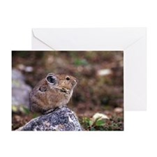 Pika sitting on rock Greeting Card