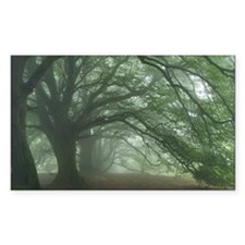 Ancient Beech woodland Decal
